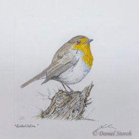 kupferstich-rotkehlchen-singvogel-coloriert