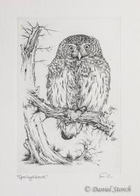 Kupferstich mit einem Sperlingskauz als Motiv, sitzt auf einem alten, flechtenbewachsenen Ast. Im Hintergrund ein abgestorbener Baum mit Höhle.
