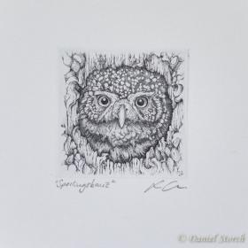 original-kupferstich-eule-tiefdruck-druckgrafik-sperlingskauz-copperplate-engraving-owl