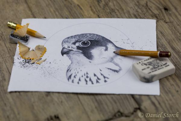 skizze-greifvogel-jagdschmuck-falkner-schmuck